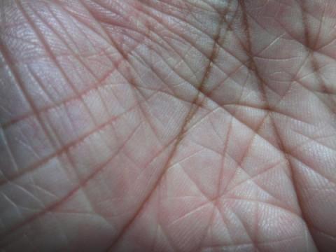 ichty-v-handpalmen